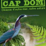 oiseaulifecapdom